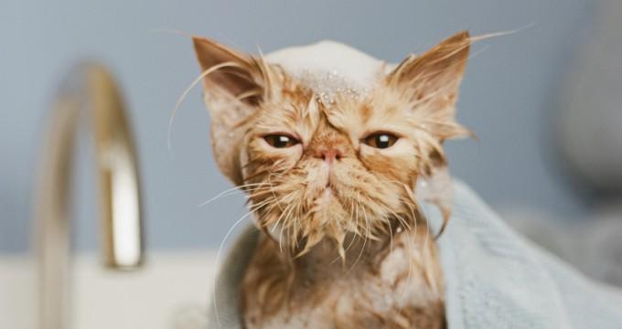 Как помыть кота – правила и советы по мытью любимца