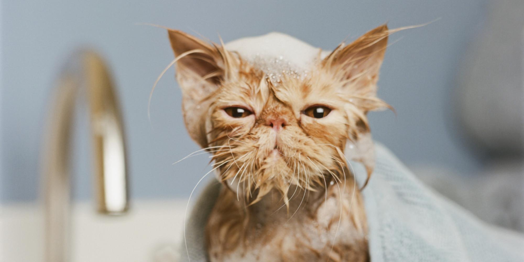 Как купать кота или кошку: важные правила и рекомендации