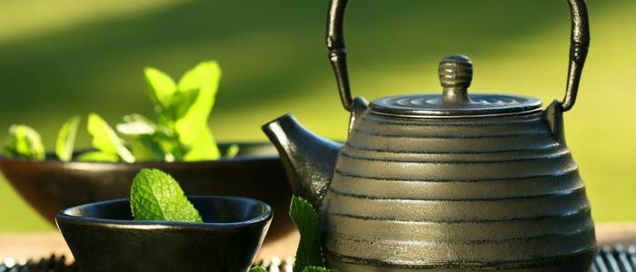 заготавливать мяту для чая
