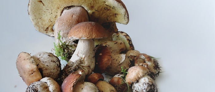 белые грибы испортились